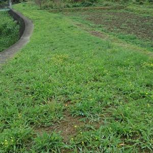 草刈りの季節(2020/07/05)