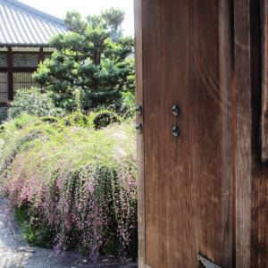 【常駐ガイド】§常林寺#3 萩見頃、心地よいお天気で、多くのお客様