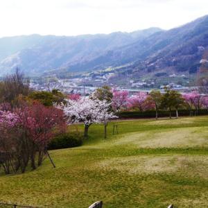 【散歩・草花記】§近所で花見。ガイド関係さらにキャンセル。