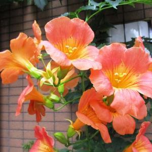 【今日のこと】§夏の花