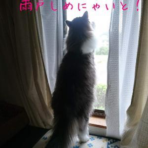 台風にゃ!