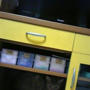 隙あらば猫あり。