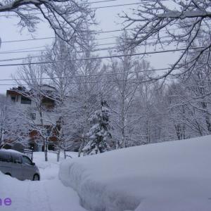今日は一日雪になりそう!