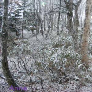 奥志賀高原は昨晩から雪になっています。