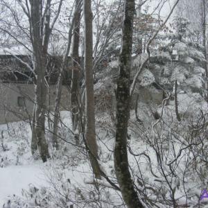 奥志賀高原は真っ白です!