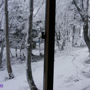 また雪でビックリ!!