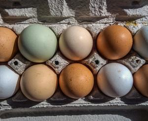 白い卵と茶色の卵の栄養価は違うと思いますか?