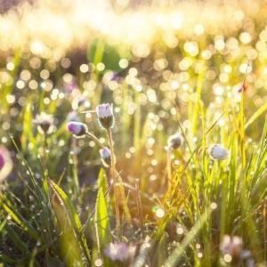 心と体の疲労を回復し幸せホルモンを増やすためには、日光浴がおススメだそうです