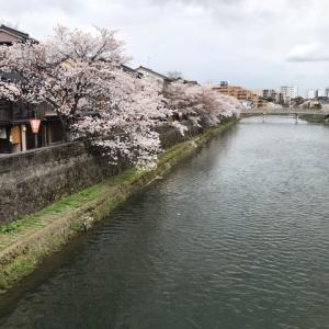 満開の桜だけれど、気分は空のように、晴れないね。