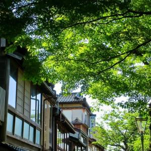 新緑の季節。主計町。