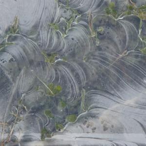 放射冷却が作った氷のデザイン画。