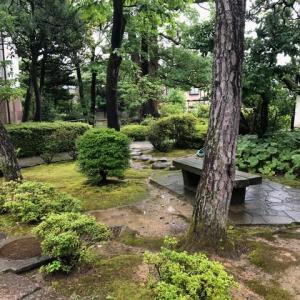 ツツジは終わったけれど、雨に洗われた緑がきれいな、彦三緑地。