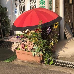 お花にも日傘が必要。旧彦三5番丁。