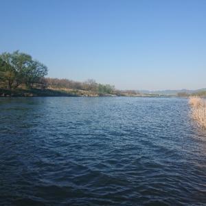 4月17日18日の九頭竜川