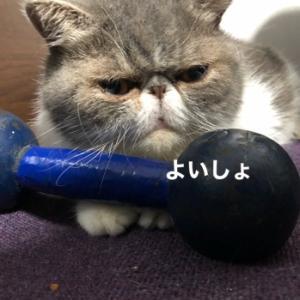 トレーニング?