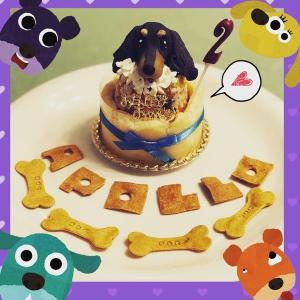 アポロ☆2歳のお誕生日