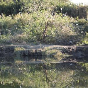 ウキ釣りで形をみる_花見川