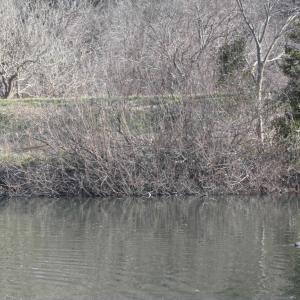穏やかな陽気が続き活性高まる_花見川