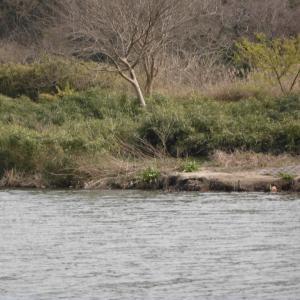 強い風の中まずまずの釣果_花見川