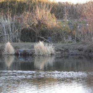 新年早々の釣果に安堵する_花見川