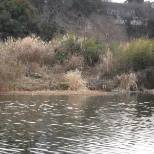 久しぶりの釣り場で釣況上向く_花見川