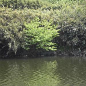 天候急変前に何とか1匹上げる_花見川