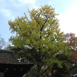 【新章】奈良から大阪へきました~整体編~㉓ お金