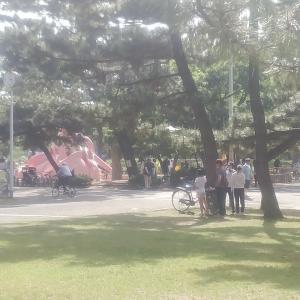 【今日のラン日記794】久しぶりの浜寺公園はいつもの風景でした_ランは最近ペースが落ちてきたので少しだけ走りました_20200517