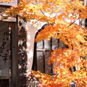 1806 福泉寺の紅葉
