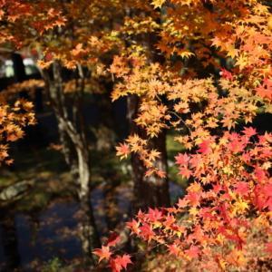 1809 福泉寺の紅葉