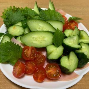 野菜も切りよう盛り付けよう