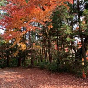 福島県須賀川市 旭ヶ丘公園の紅葉