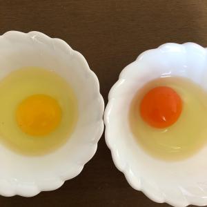 卵の色について考えてみよう