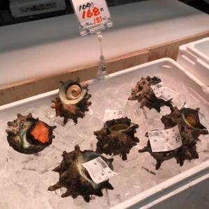 サザエと白バイ貝