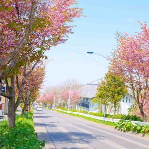 春のお祭りシーズン