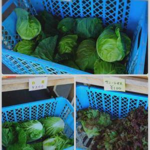 釧路町の新鮮な野菜♪ 穴場発見!