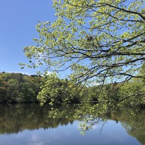 5月中旬 新緑の江別 野幌森林公園
