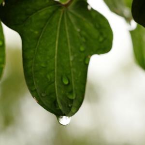 しっかり降雨の日