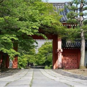 京都 青モミジに映える古寺 真如堂