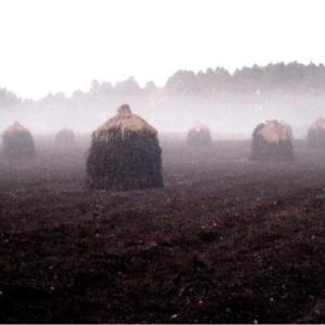 朝もやの落花生畑