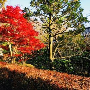 佐倉城址公園を散策‼️