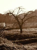 セピア色の田んぼの風景‼️