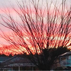 おめでたい色の夕焼け‼️