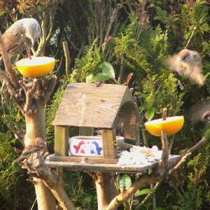 朝から賑わう小鳥たち‼️