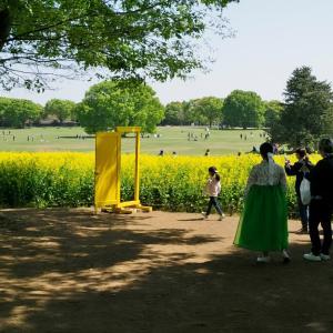 昭和記念公園の菜の花、チュウリップなど(2021.4.11)