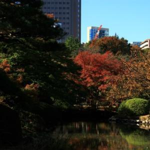 新宿御苑の紅葉①