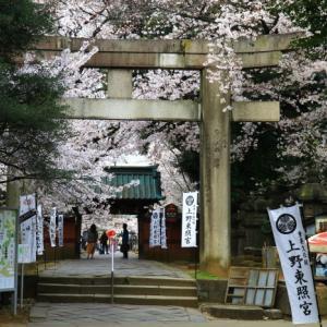 上野東照宮の桜