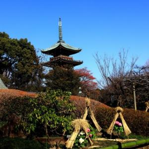 冬ぼたん 上野東照宮