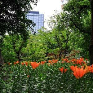 日比谷公園のユリの花