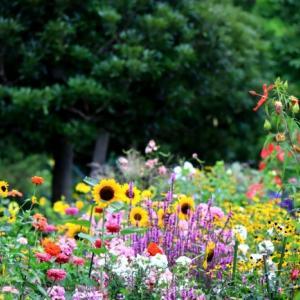 花壇の花 光が丘公園